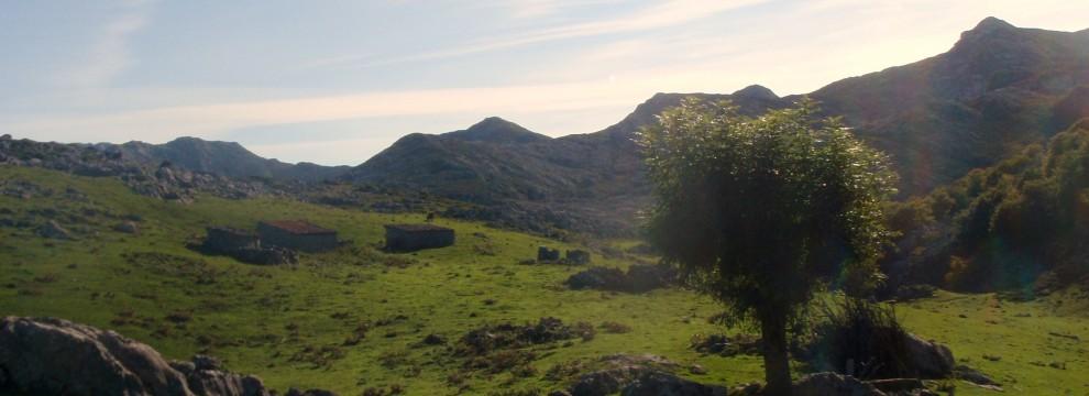 Mountain pastures