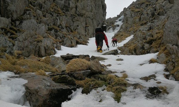 Dog walking in Tower gully