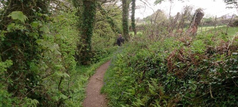 Lovely little path around the coastline