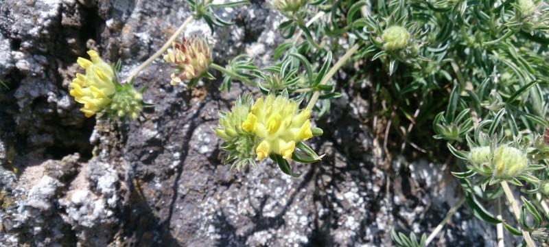 A wide range of flowers on Llanddwyn Island