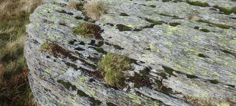From lichen to plants actually growing in the dead moss